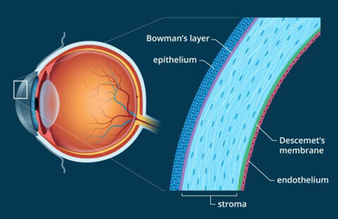 Diagram of the cornea